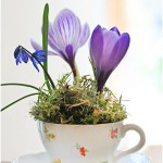 Crocuses in a cup - by Craft & Creativity